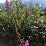 Fauna et Flora