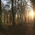 Zaterdagochtend trail loop op de Kluisberg