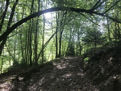 Sporten in de Ardennen Bohan